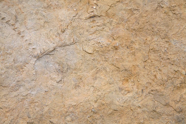 Fossil Background Natural fossils for background terryfic3d stock pictures, royalty-free photos & images