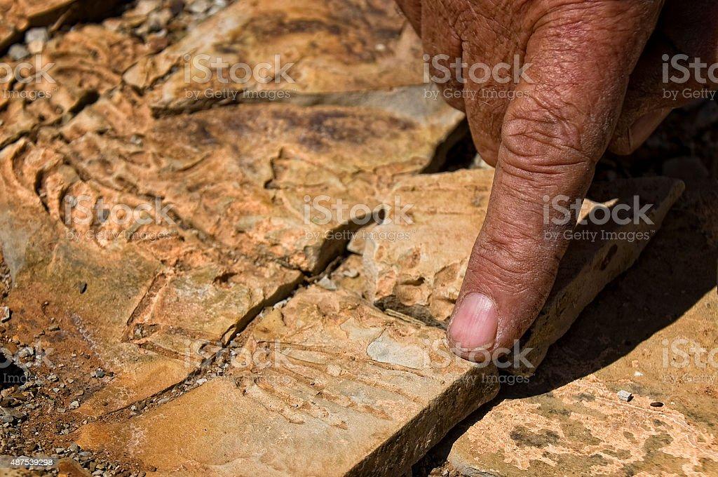 Fossil bones in Africa stock photo