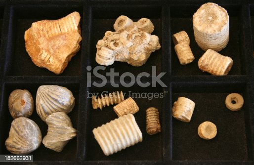 Fossil collection including crinoid stems and brachiopods