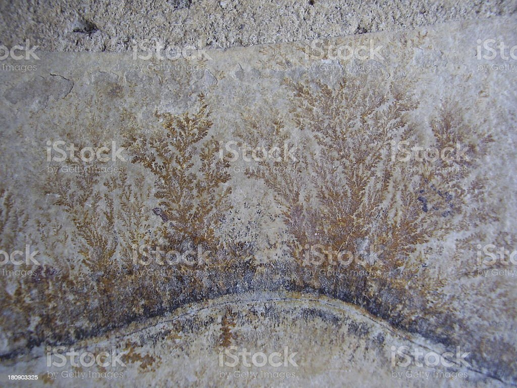 Fossil Fern stock photo