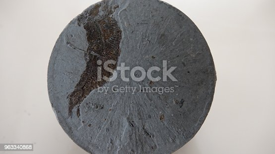 istock Fossil fish in the rock 963340868
