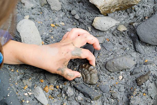 化石を狩る ストックフォト
