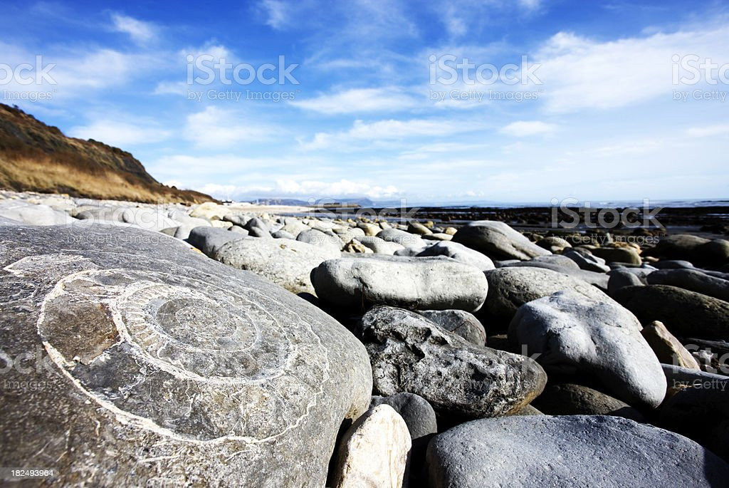 Fossil on jurassic coast, Lyme Regis stock photo