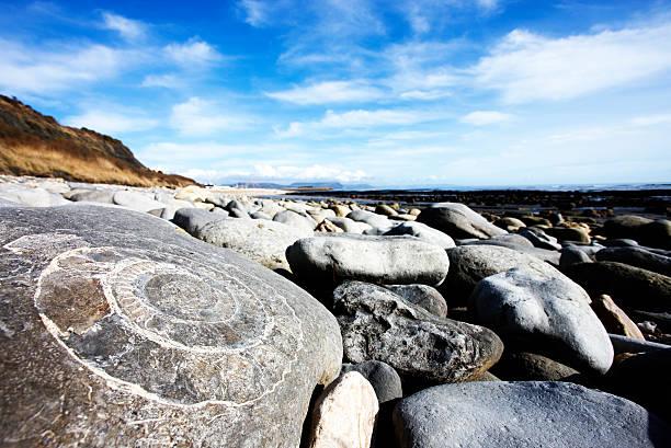 Fossil an der jurassic coast, Lyme Regis – Foto
