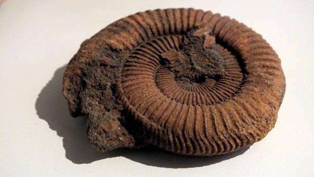 Fossil  – Foto