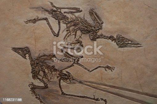 Birdlike dinosaur fossils