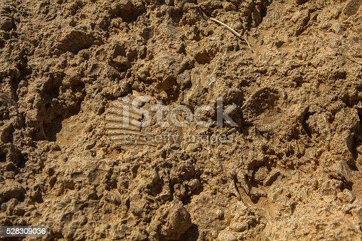 istock Fossil rocks 528309036