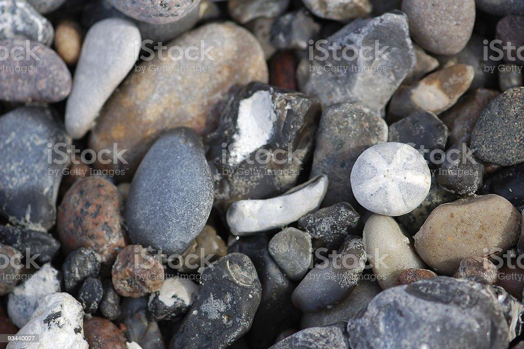 Fossil-Seeigel Lizenzfreies stock-foto