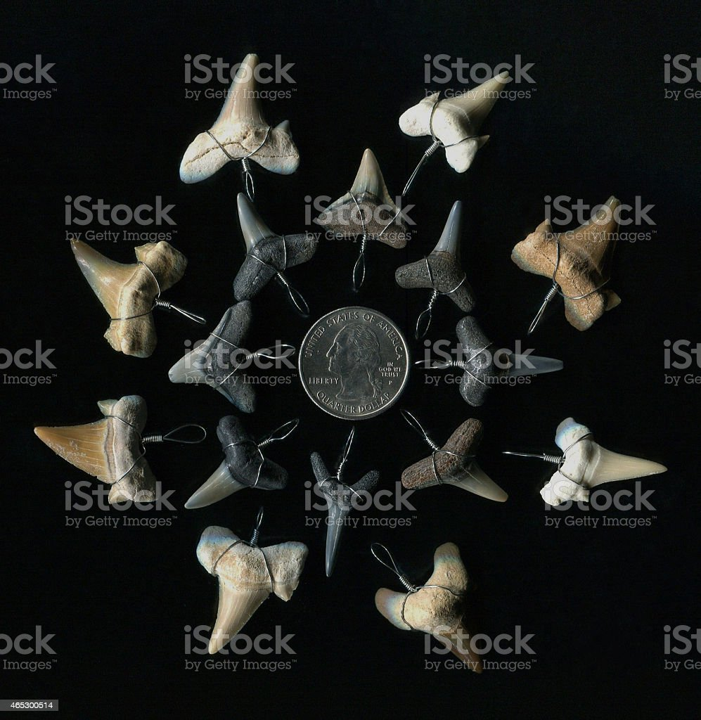 Fossil Shark Teeth stock photo