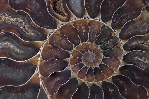 fossil shell macro texture