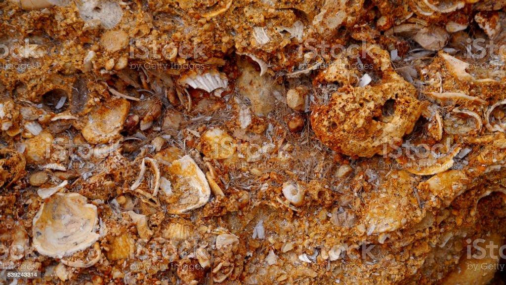Fossil Shell Mahdia Tunisia stock photo