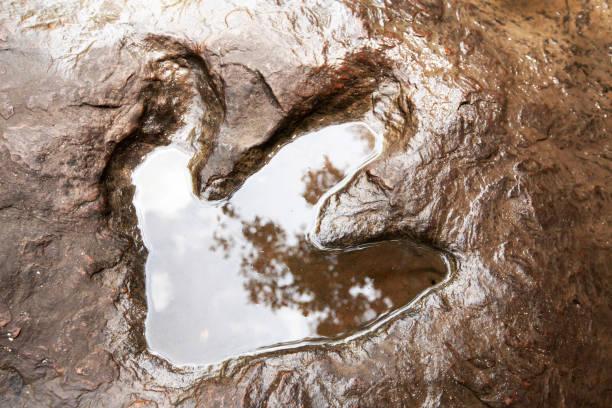 Fossilised footprint of a theropod dinosaur on the stream picture id1158626830?b=1&k=6&m=1158626830&s=612x612&w=0&h=imyf zkhzwlvje ckosqkakrp96k1pc7y8ecdeizzuu=