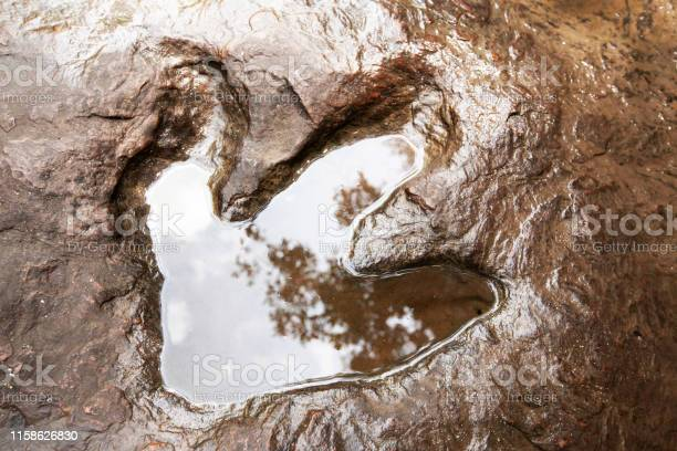 Photo of A fossilised footprint of a theropod dinosaur on the stream.