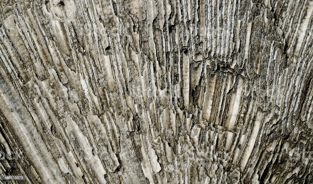 fossilized fan coral royalty-free stock photo