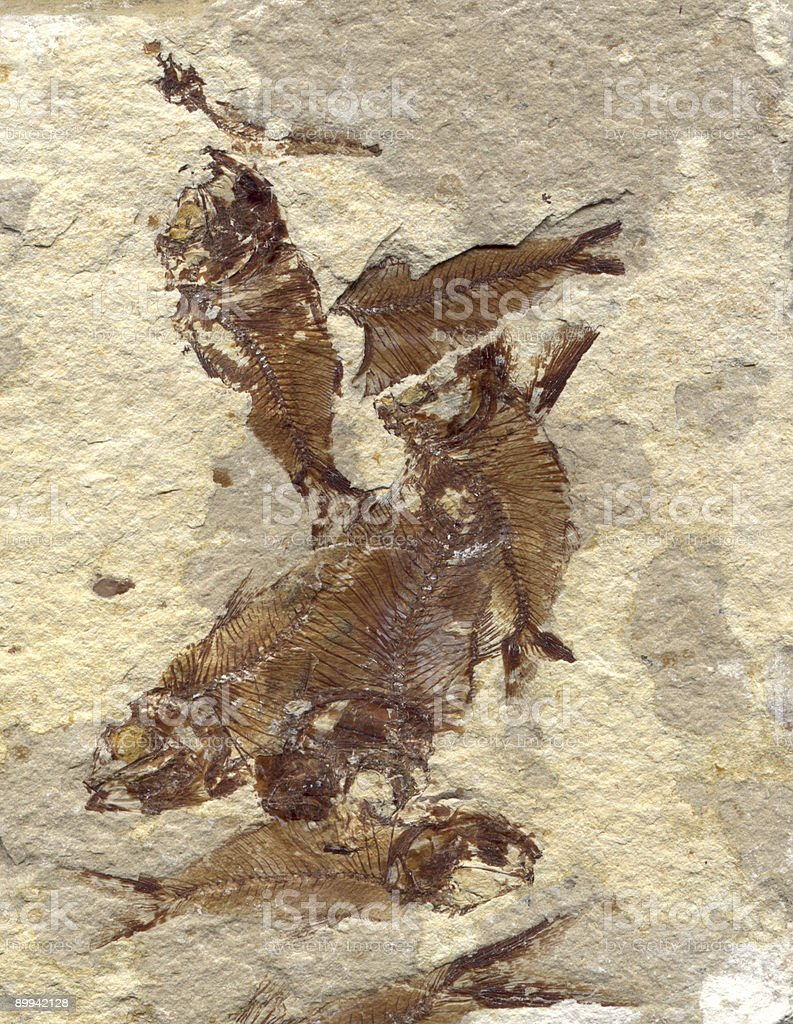 Fossilized Fish - Royalty-free Ancient Stock Photo