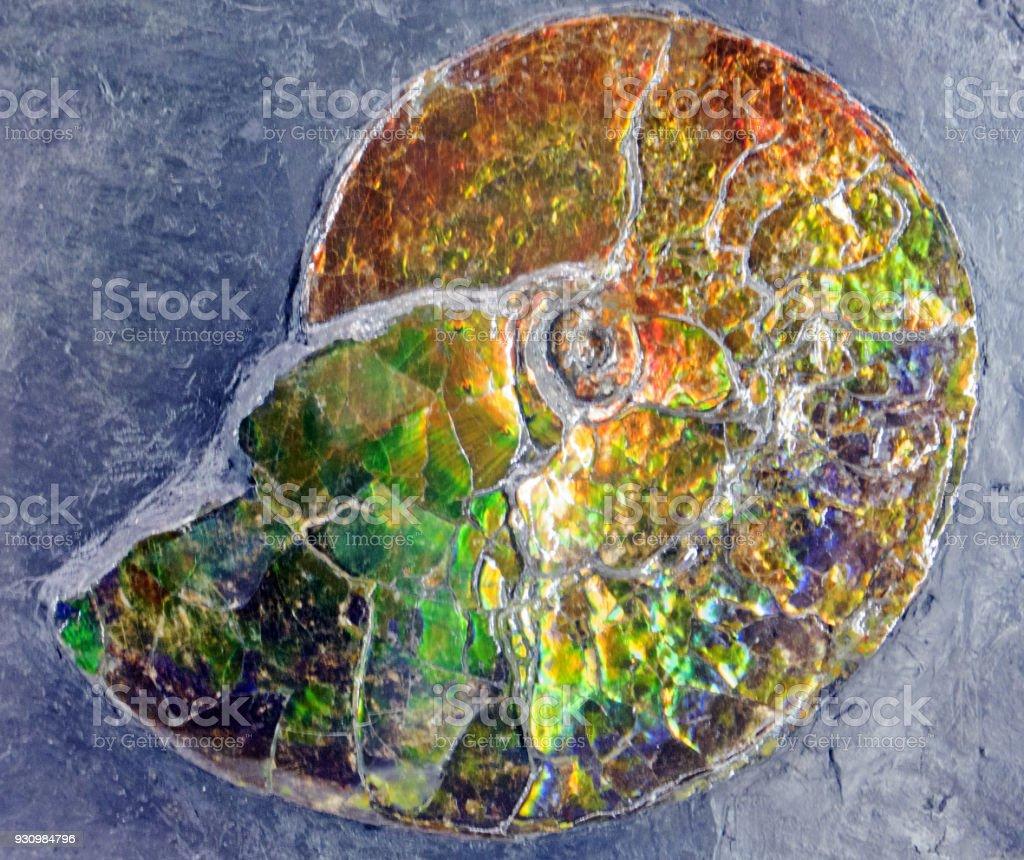 Fossilized Iridescence stock photo
