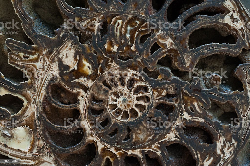 Fossilized Shell stock photo