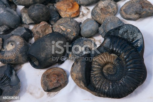 istock Fossils for sale in a curio shop. 450308391