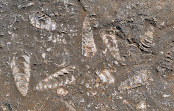 Fossils, Oman stock photo