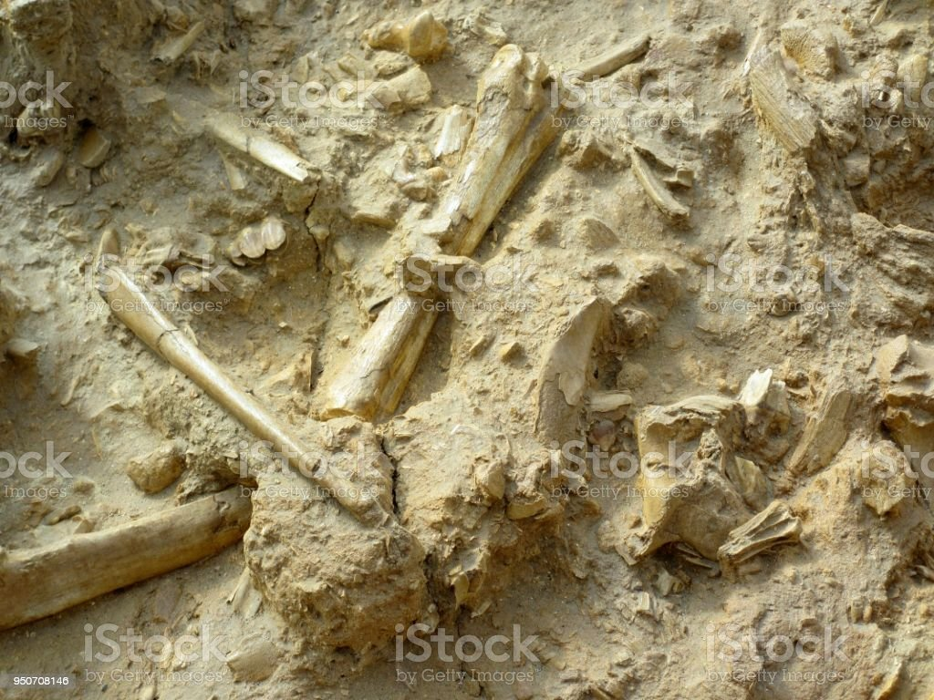 Fossils on the Ground stock photo