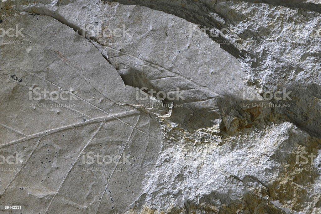 Fossils royaltyfri bildbanksbilder