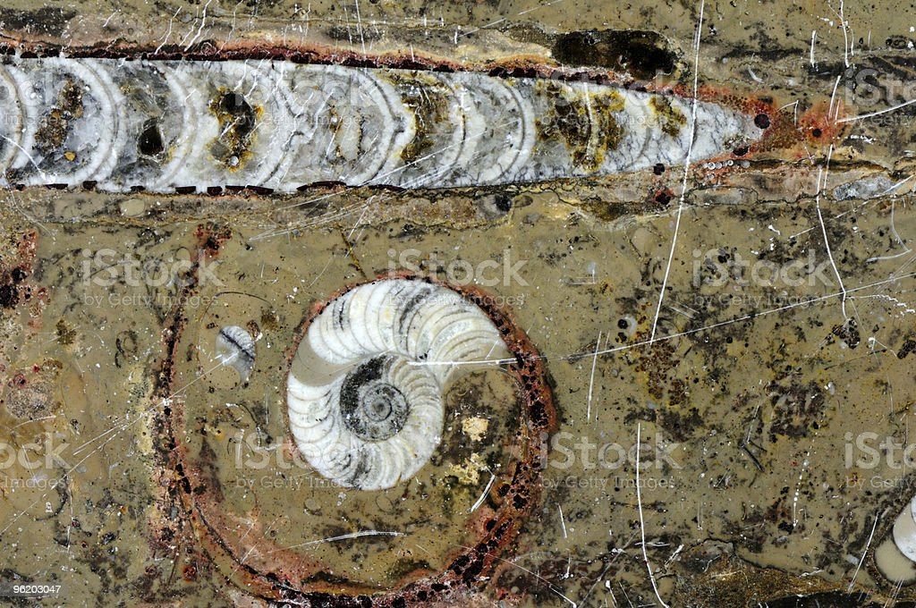Fossils royalty-free stock photo