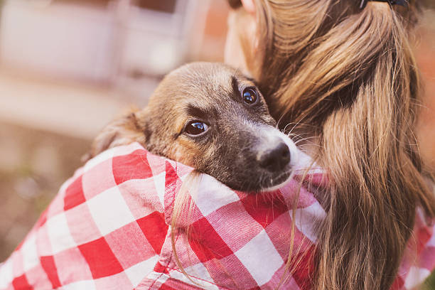 Foster dog with new owner Scared foster dog with new owner sheltering stock pictures, royalty-free photos & images