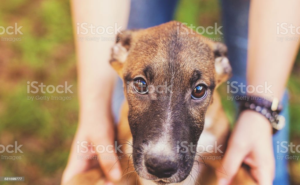 Foster dog with new owner stock photo