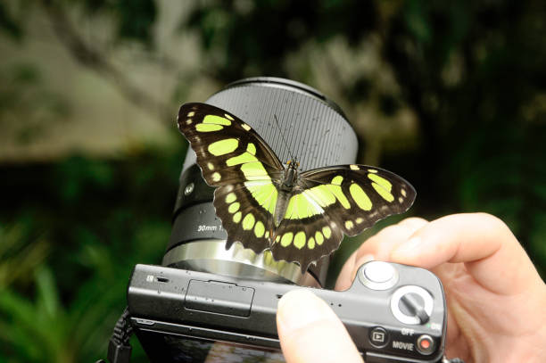 Fotografando borboleta na câmera stock photo