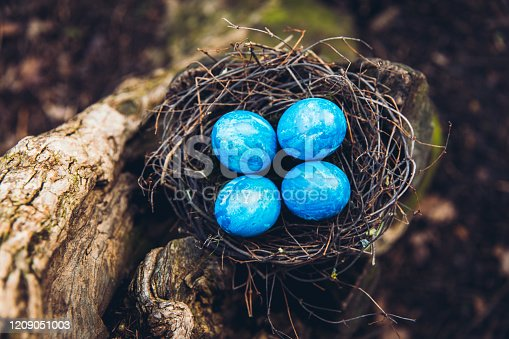 Scenic view of blue decorated Easter eggs in natural bird's nest on the ground in the park - spring concept
