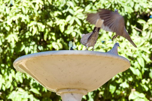 Fountain and doves