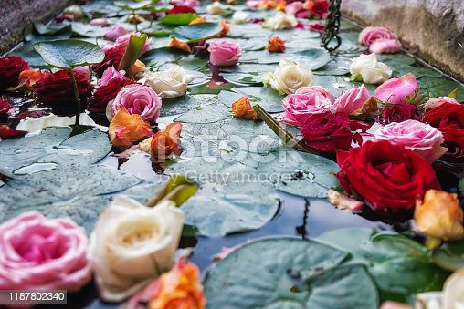 A fountain filled with water lilies roses