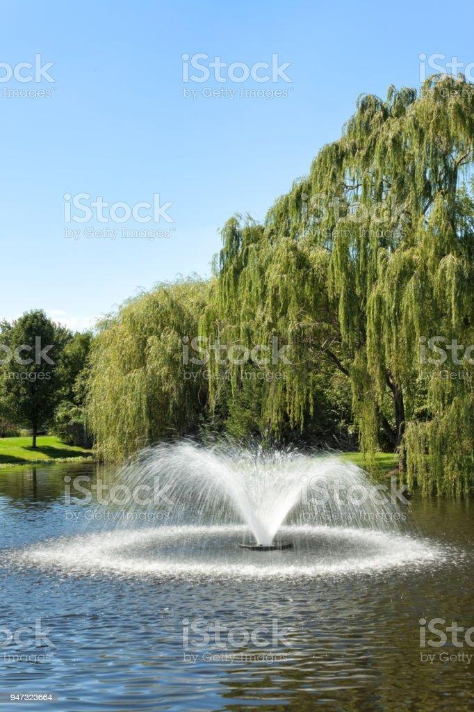 Fountain & Willow Tree stock photo