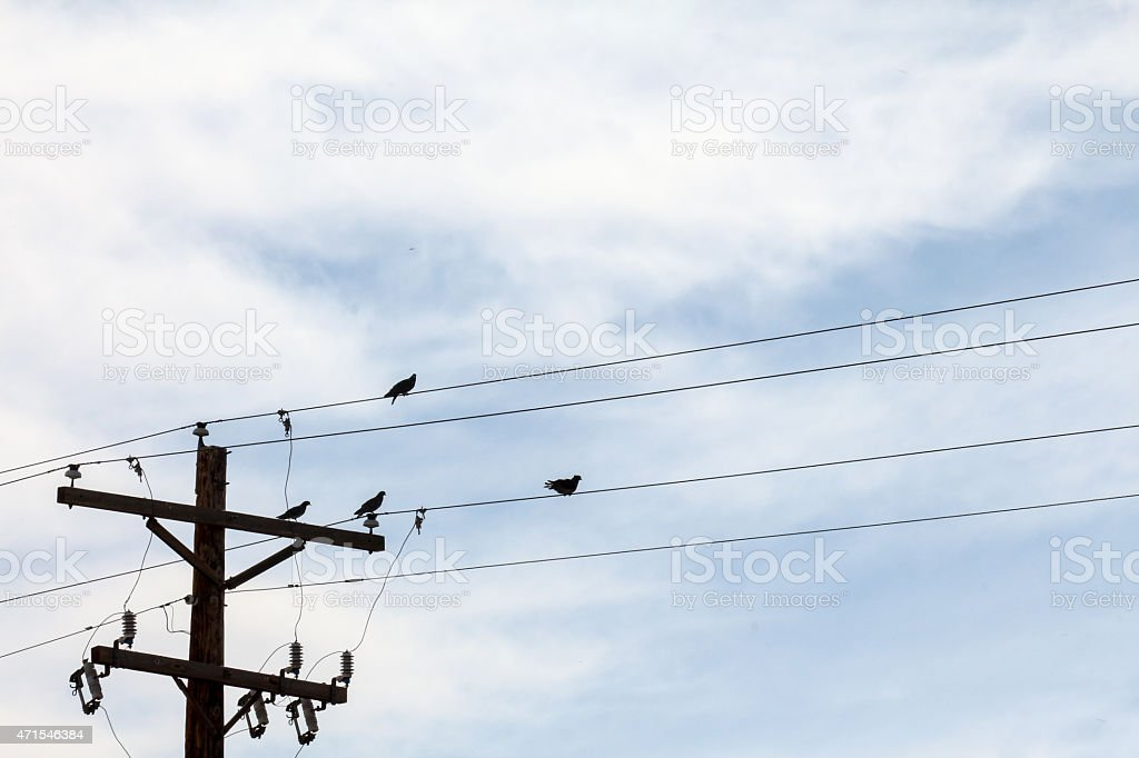 Four Birds On A Telephone Wire With Telephone Pole Stock Photo ...