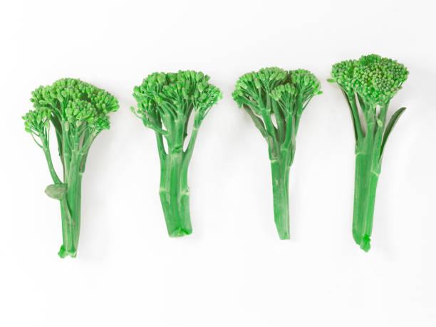 four broccoli spears stock photo