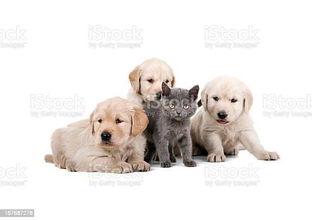 Four buddies picture id157687278?b=1&k=6&m=157687278&s=612x612&h=u7ykagwgawzoszuhi 41 le8a70 drezmy 0szvnsg8=