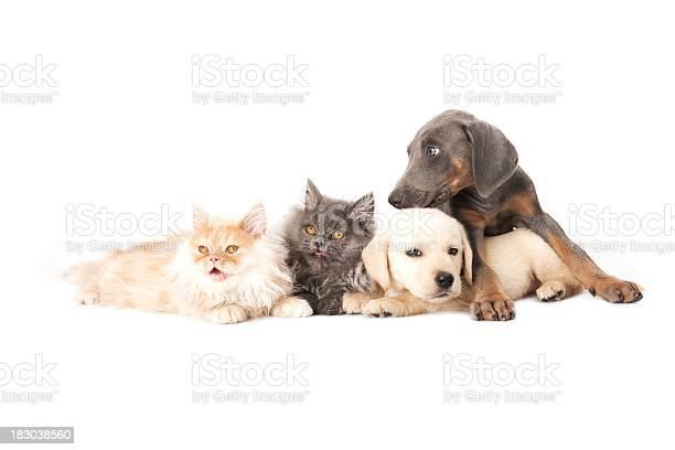Four buddies picture id183038560?b=1&k=6&m=183038560&s=612x612&h=dgwhqyjhsgyt1nafz5nr1c4n1ss6yvirq0uf1ca0ela=