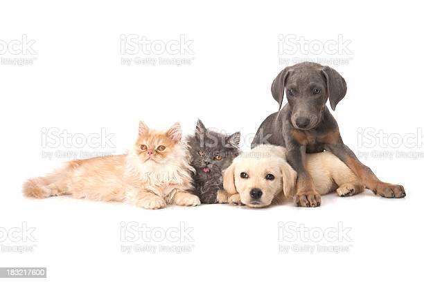 Four buddies picture id183217600?b=1&k=6&m=183217600&s=612x612&h=eomkfnha8shz6vjhm3lme28t1d4l ukihcseozbk  a=