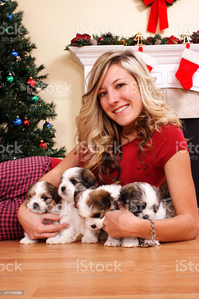 Four Christmas Puppies royalty-free stock photo