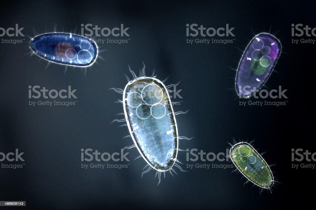 Cztery kolorowe protozoons/Organizm jednokomórkowy – zdjęcie