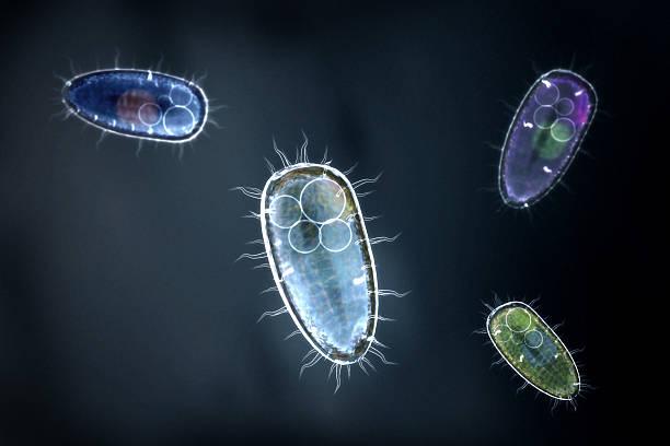 vier bunte protozoons/einzeller - einzeller mikroorganismus stock-fotos und bilder