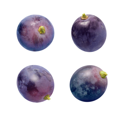 Four concord grapes photographed  individually, at different angles.  The grapes are a dark purple color, and have a green stem.  A Concorde grape is a cultivated variety of fox grape, used to make wine, juice, and jellies.  These grapes can be easily lifted off of the page and used and your food project.  This fruit can be easily found in the produce section of the grocery store. The image is a cut out, isolated on a white background.