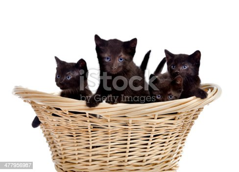 istock Four Cute Black Kittens in a Basket 477956987