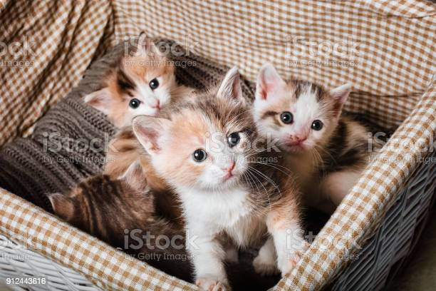 Four cute kitten in a white basket picture id912443616?b=1&k=6&m=912443616&s=612x612&h=j53zis torl4i6wem oeqvq21wvtf2wps7c3 ojewjk=