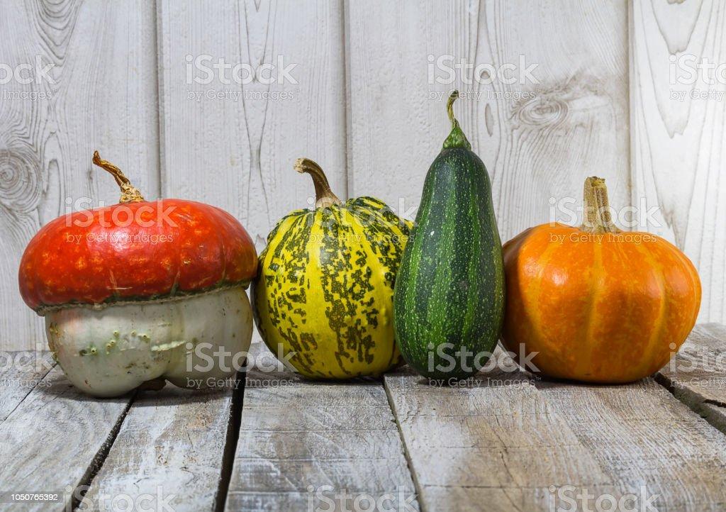 Four decorative pumpkin on wood background stock photo