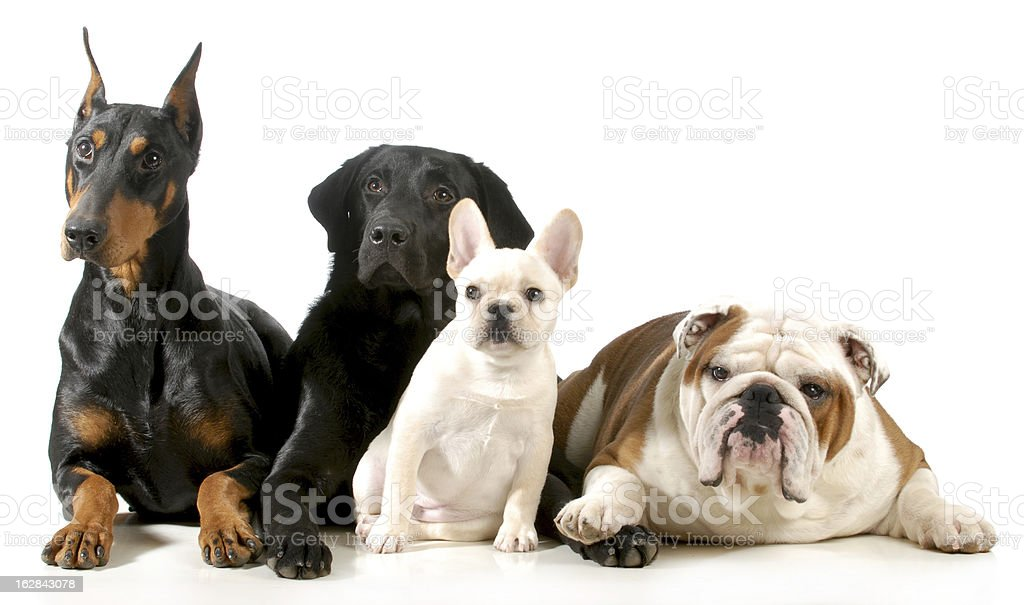 four dogs royalty-free stock photo