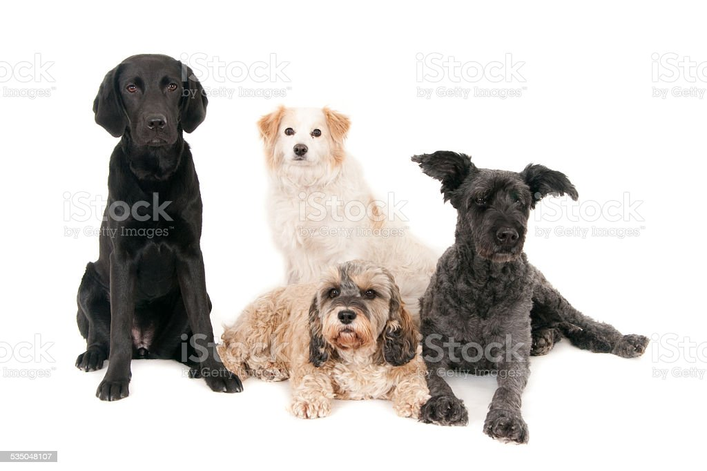 four dogs posing together stock photo