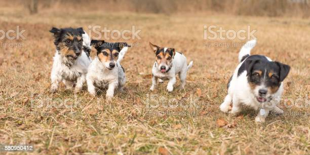 Four dogs running in the fall jack russell terrier picture id880950412?b=1&k=6&m=880950412&s=612x612&h=oqicdj2f4i skhxcobmv7qamfihhp3ntxxmoeqdtnmc=