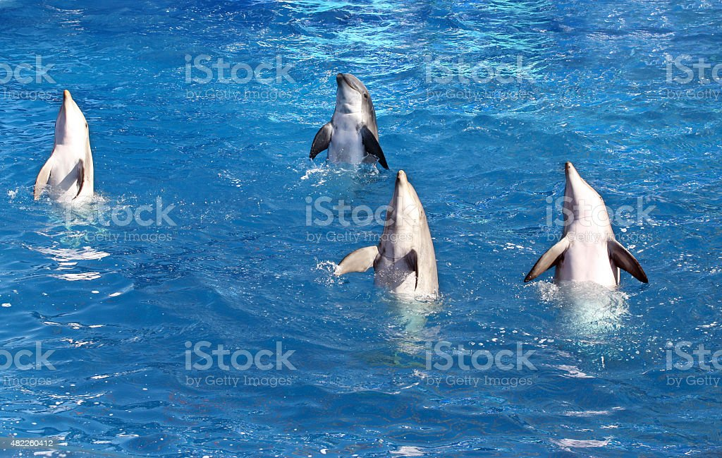 Four Dolphins stock photo