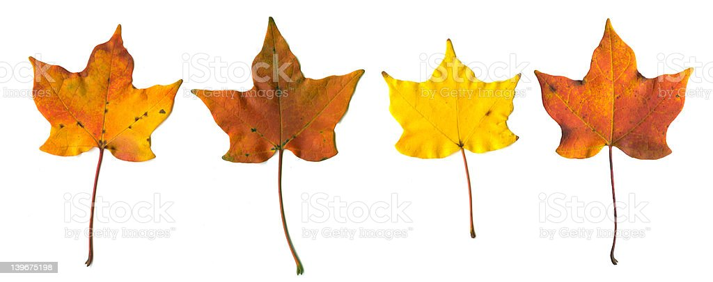 Four fall leaves laid out stock photo
